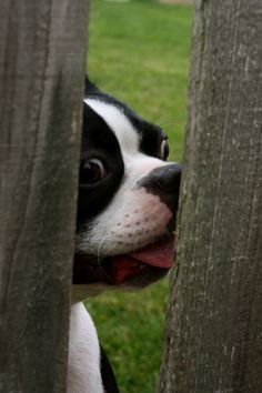 Friendzy Peek-a-boo!! I see you!