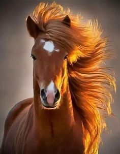 horse is a symbol of freedom.  Such a gorgeous animal.  Maybe someday....