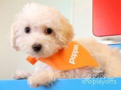 PureWow Puppy Playoffs Competition | Home + Garden | PureWow National