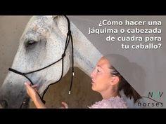 🐴Cómo hacer una jáquima o cabezada de cuadra para caballo🐴 - YouTube Horses, Youtube, Leather, Ideas, Craft, Equestrian, Twine, Knots, How To Make