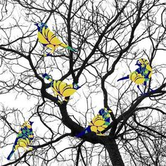 I was waiting for a melody but I got an orchestra #thisisniaz #niazzia #melody #orchestra #bird #tree #colorful #color www.niazzia.com