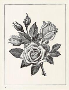 black and white flower leaves - Google Търсене