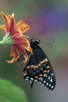 Pretty. ..