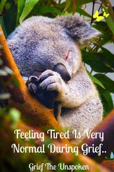 Feeling Tired Is Very Normal During Grief.. https://www.facebook.com/photo.php?fbid=566304276734969=a.337553406276725.84687.337438772954855=1_t=notify_me