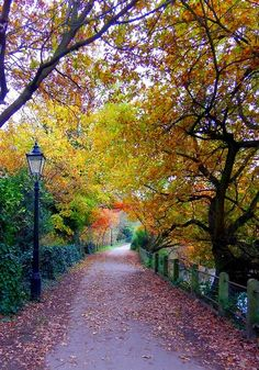 Hampstead Heath, London ~ near where we lived