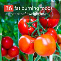 "When you see the words ""fat burning foods"" are you a bit skeptical? I mean, it's pretty hard to believe that putting more calories, fats, and carbs into your body could actually lead to weight loss. But there are some health foods that have a very high thermogenic effect and can burn calories as..."