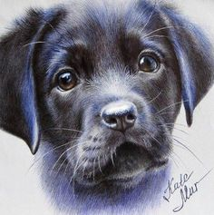 Cute Puppy Drawing By: _ Check out. Animal Paintings, Animal Drawings, Art Drawings, Amazing Drawings, Realistic Drawings, Crayons Pastel, Ballpoint Pen Art, Puppy Drawing, Dog Eyes
