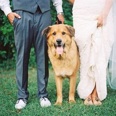 love dogs at weddings