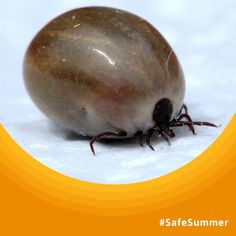 Watch this video featuring #Wiltshire's Dr Kinlin for advice on how to deal with ticks and tick bites #SafeSummer
