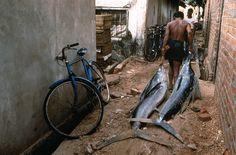 Steve McCurry - SRI LANKA. Trincomalee. 1995. Fresh off the boat, bill-fish go straight to market.