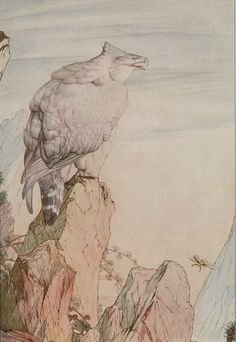 Vintage Maurice Edward Detmold Art Print Wildlife Bird Prey Eagle Insect Beetle   eBay