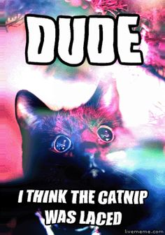 Dude I Think The Catnip Was Laced