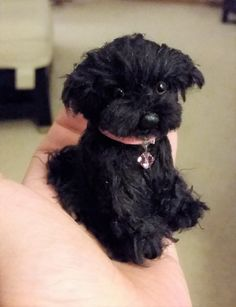 Looks like Jeffrey! Toy Poodle Puppies, Teddy Bear Puppies, Felt Animals, Cute Baby Animals, Dog Haircuts, Miniature Dogs, Custom Dog Portraits, Schnauzer Puppy, Cute Dog Pictures