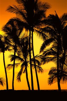 ✮ Hawaii - Big Island - View of palm trees silhouetted by fiery sunset