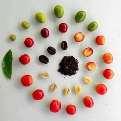 Coffee Beans - Top Coffee Brewing Ideas Which Are Tasty! Coffee Is Life, Coffee Type, Great Coffee, Coffee Shop, Coffee Coffee, Coffee Bean Art, Coffee Grain, Coffee Maker, Coffee Farm