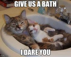 Cats That Just Love To Hang Out In The Sink (15 Memes)