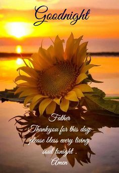 Lovely good night wishes image - Imagez Lovely Good Night, Good Night Image, Good Morning Good Night, Night Time, Sunflower Quotes, Sunflower Pictures, Good Night Blessings, Good Night Wishes, Good Night Prayer Quotes