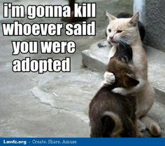 Top 25 funniest cat and dog quotes