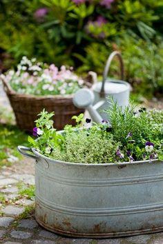 pictureperfectforyou:  (via Krydderurter fyldt med smag i haven eller på altanen - ISABELLAS guider dig)
