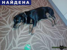 Найдена собака кобель г.Санкт-Петербург http://poiskzoo.ru/board/read30964.html  POISKZOO.RU/30964 Найдена собака кобель г. Санкт-Петербург Красносельский р-н, М. Казакова. Метис, .., .. года, вес .. кг. Чипа в вет. клинике не нашли. Очень ухоженный и очень добрый. Здоровый. Отдали на улице проходя мимо .. мужика, сказали что умерла хозяйка. А вдруг его кто-то ищет?   РЕПОСТ! @POISKZOO2 #POISKZOO.RU #Найдена #собака #Найдена_собака #НайденаСобака #Санкт #Петербург #СанктПетербург #СПБ…