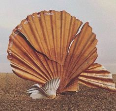 The Scallop of Aldeburgh via Europe Beaches, Beach Holiday, Shapes, Instagram Posts, Instagram Summer, Inspiration, Vintage, French Lingerie, Seashells
