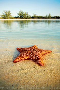 Starfish Chillin' On The Sand...