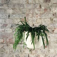 ODD STANDARD Blom Wreaths, Plants, Home Decor, Decoration Home, Door Wreaths, Room Decor, Deco Mesh Wreaths, Plant, Home Interior Design