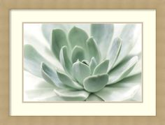 'Zen' by Dina Marie Framed Photographic Print