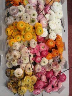 Decorar é um Prazer.Bibi Villela. Flowers. Bouquet.