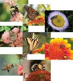 Greeting Cards: Insects and Flowers (sold in sets of 8 or individually)  Photographer Kathy Keatley Garvey comes from a long line of beekeepers dating back at 60 years! She loves to see the world through a viewfinder; especially honeybees and insects, whether they are foraging, resting or flying.