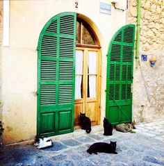 Did you know that cats are the most photographed and sought-after attraction in Deià, Mallorca? Read all about it here: http://travelling-cats.blogspot.be/2015/03/cats-from-deia-mallorca.html