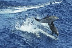 Are Scientists Deaf to Sonic Blasting's Harm to Dolphins and Whales?