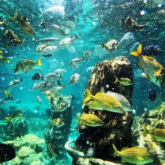Discovery Cove in Orlando, FL is the coolest experience. Great for beginner snorkelers.