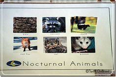 N is for napping and nocturnal