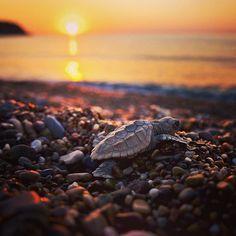 Baby sea turtle on the beach!