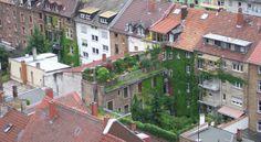 green roof in Karlsruhe Germany