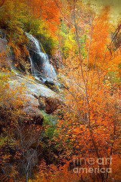 The Naramata Falls in Autumn, Naramata BC Canada Watercolor Projects, My Favorite Image, Buy Prints, British Columbia, Touring, Fine Art America, Scenery, Canada, Autumn