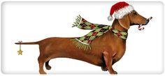 Christmas Red Dachshund Dog 100% Cotton Flour Sack Dish Towel Tea Towel