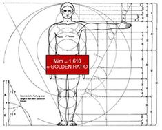 The proportions of the body are ruled by the Golden Ratio