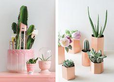 Decorar con cactus y plantas suculentas | Decorar tu casa es facilisimo.com