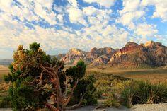 Desert Tree by Celem.deviantart.com on @deviantART