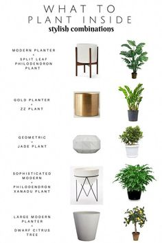 Take the guess out of what to plant iside! Sharing a Stylish Plant + Planter com. Take the guess out of what to plant iside! Sharing a Stylish Plant + Planter combinations. Modern Oh So Stylish Planters — Chic Little House.