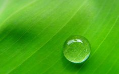 💚 Green 💚