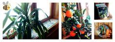 Rozeta handmade: DIY, czyli zrób to sam: wianek;-)