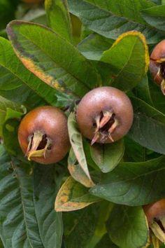 Fruit plant nursery in bangalore dating