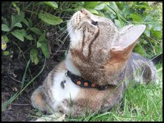 Halloween Boo Spooky Cat Safety Collar by WhiskersBoutique on Etsy Halloween Jack, Halloween Pumpkins, Jack O Lantern Cat, Cat Collars, Safety, Kitty, Homemade, Cats, Animals