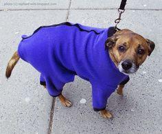 The Doggie in the Purple Sweater