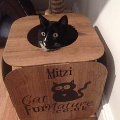 This is Smudge pretending to be Mitzi  he is so cute!   #cat #catsofinstagram #cats_of_instagram #catfurnature #catfurniture #catsinboxes #cattoy #INSTACAT_MEOWS #cutecat #PurrMachine #catsinboxes #catbox #Excellent_Cats #BestMeow #dailykittymail #thecatniptimes #catcube #catpod #ArchNemesis #FlyingArchNemesis #myindoorpaws #ififitsisits #cutecatcrew #catchalet #catnip #themeowdaily #kitty #catpyramid #pyramid