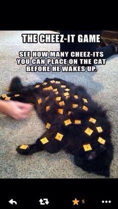 Cheez-it game!! Poor cat