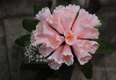 Rhododendron paper flower